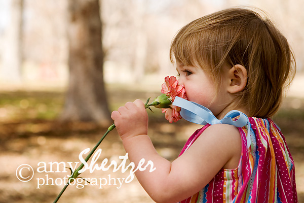 Birds and Cookies  Bozeman Child Photographer  » Amy Shertzer ... f57ac254c