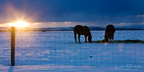 Two horses search for food beneath the snow as the sun sets in the Montana sky.