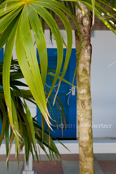 A green palm frond hides a bright blue door.