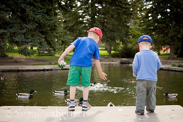 feeding ducks at the MSU duck pond in Bozeman.